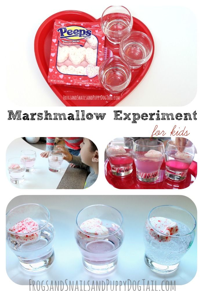 marshmallow-experiment-for-kids